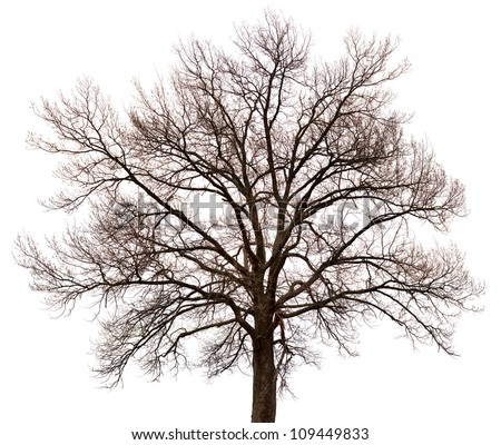 A silhouette of a tree isolated on white background - stock photo