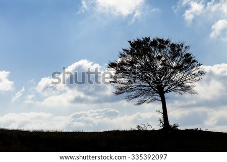 A silhouette tree in the horizon line. Blue sky with clouds background - stock photo