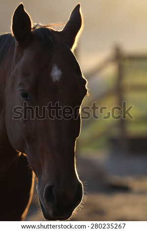 A silhouette view of a portrait of a horse. - stock photo