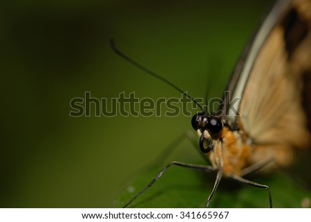 A single butterfly against a blurred green background with dark edges. - stock photo