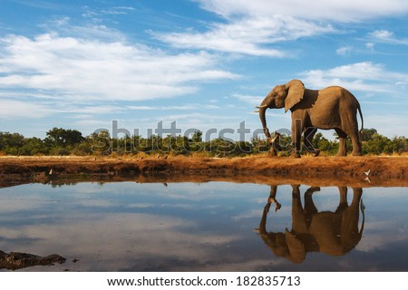 A single elephant is reflected on the still surface of a waterhole on a beautiful day in Botswana - stock photo