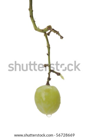 A single green grape with water droplets left on the grape stem. - stock photo