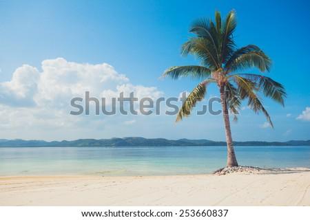 A single palm tree on a beautiful tropical beach with white sand - stock photo