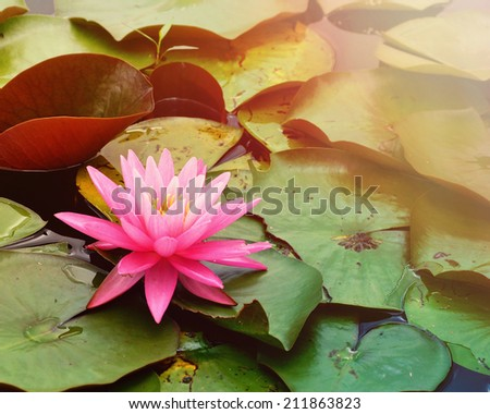 A single pink lily pad is on a pond of water for a tranquil or nature scene. - stock photo