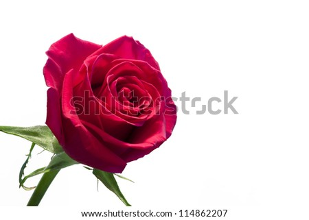 A single red rose isolated on white background - stock photo