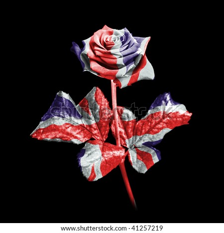 A single rose against a black background digitally enhanced in the colours of the Union Jack flag. - stock photo