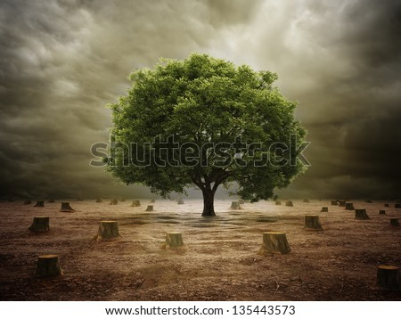 A single tree left in a deforested landscape - stock photo