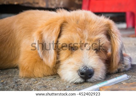 A sleeping half brown and orange hair color dog on cement floor with a plastic straw at the front - stock photo