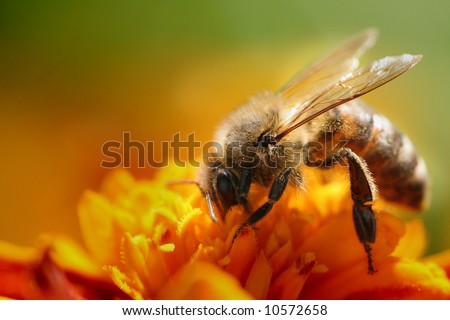 A small bee on the yellow flower - stock photo