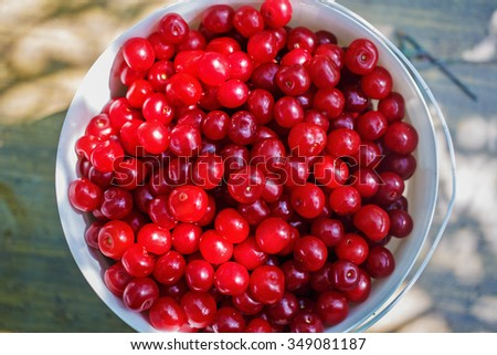 A small bucket of red ripe cherries without tails. Harvesting. Selective focus. - stock photo
