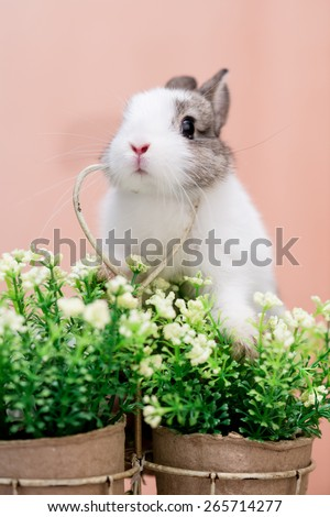 A small bunny sitting on a pot of flowers resting its head on a heart shaped decoration  - stock photo