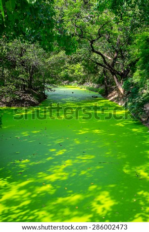 A small canal full of green duckweed - stock photo