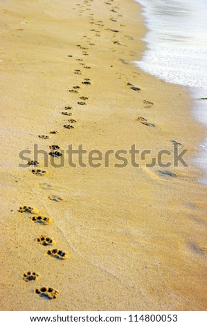 A small dog and its human companion have left their prints on the beach. - stock photo