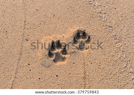 A small dog footprints on the beach. - stock photo