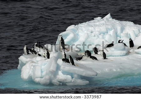 A small group of Antarctic chinstrap penguins on a drifting ice floe. Picture was taken in the Southern Ocean during a 3-month Antarctic research expedition. - stock photo