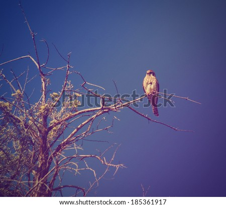 a small kestrel sitting on a branch done with a vintage retro instagram filter  - stock photo