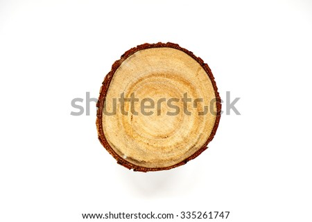 A small piece of chopped wood branch.                                - stock photo