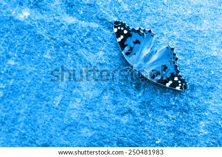 A small tortoiseshell butterfly rests on the rock - stock photo