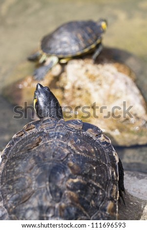 A small turtle in nature - stock photo