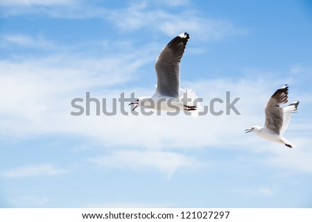 A small white expanding cloud in clear blue skies. - stock photo