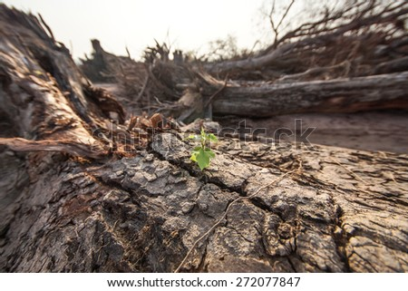 A small young green tree growing on a dead cut down tree - stock photo