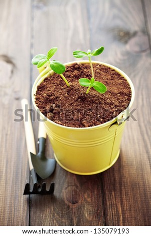 A small young plants in a pot - stock photo
