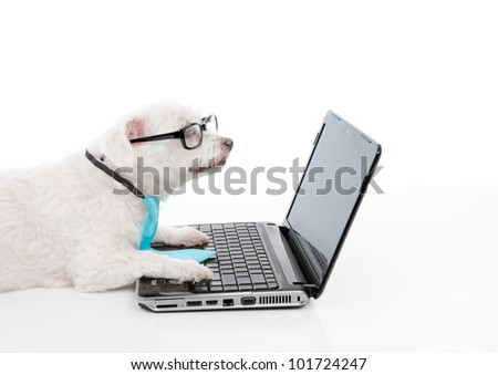 A smart dog or savvy shopper dog using the laptop and or internet - stock photo