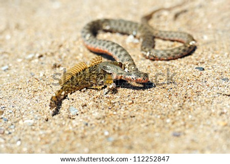 A snake is in a natural habitat. - stock photo