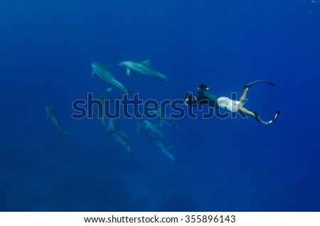 A snorkeler freedives together with indo pacific bottlenose dolphins in the crystal clear blue waters off Reunion Island. - stock photo