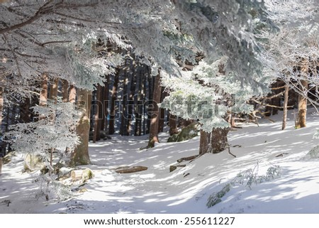 A snowy hike along the Appalachian Trail at Roan Mountain heading up to Round Bald.  - stock photo