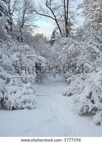 A snowy pathway in January - stock photo
