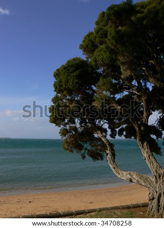 A solitary tree by a calm sea in a sunny afternoon - stock photo