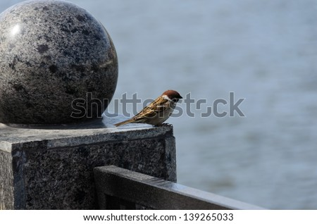 A sparrow on the marble columns at the river - stock photo