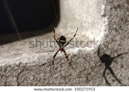 A spider dangling from a silk strand - stock photo