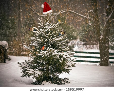 A Spruce tree in the snow decorated with a Santa hat and mitts, and a little chickadee, goldfinch, and cardinal perched on its branches.  - stock photo
