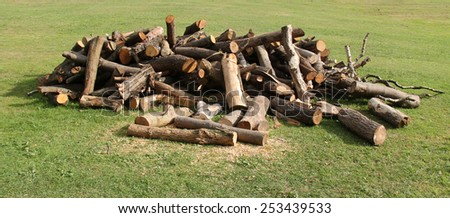 A Stack of Freshly Sawn Tree Logs and Wood. - stock photo