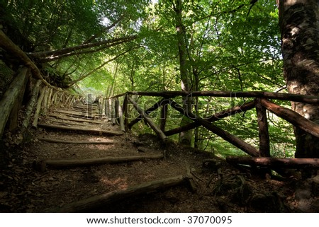 A stairway made of tree branches going steep up a mountain and covered by tree aisle of tree tops - stock photo