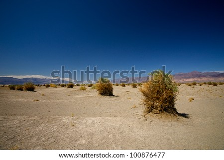 A stalk of plant in the Devil's Cornfield section of Death Valley National Park. - stock photo