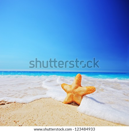 A starfish on a beach with clear sky, shot with a tilt and shift lens - stock photo