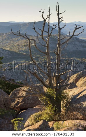 A stark Juniper tree barely hangs on to a rock mountainside in Oklahoma's Wichita Mountains National Wildlife Refuge. - stock photo
