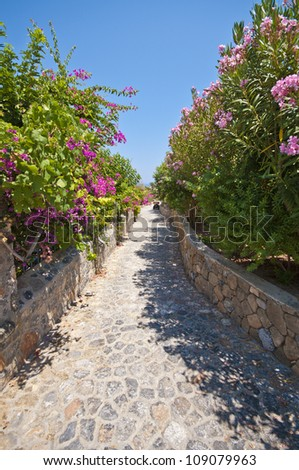a stone pathway lined with glorious flowering shrubs in Lindos on the greek island of Rhodes. - stock photo