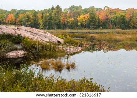 A stony bog edge and distant multicoloured fall trees, Killarney, Ontario - stock photo