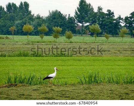 A stork along a ditch in a hay land - stock photo