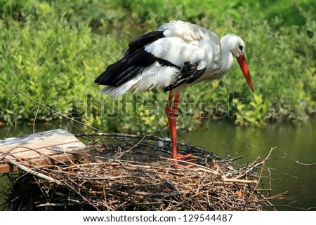 A stork standing in its nest, green nature in the background. - stock photo