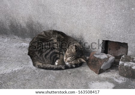 A stray cat outdoors. Sleeping in the corner - stock photo