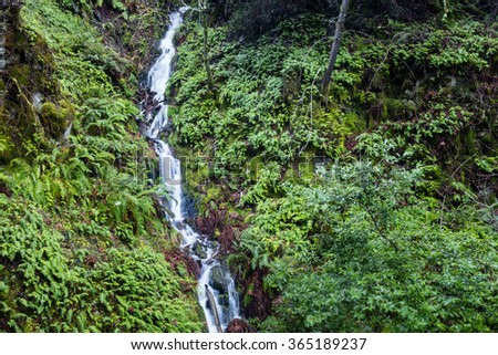 A stream flows through a lush forested landscape near Point Reyes in northern California.  - stock photo