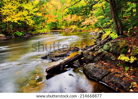 A stream runs though a colorful forest during the autumn season.  - stock photo