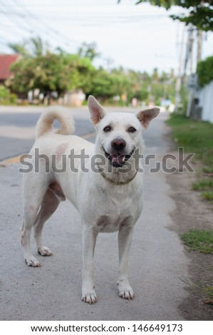 A street white dirty dog. - stock photo