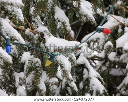 A string of outdoor Christmas lights hangs from the branches of a snowy evergreen tree. - stock photo