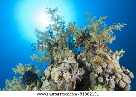 A stunning tropical coral reef scene backlit by the sun - stock photo